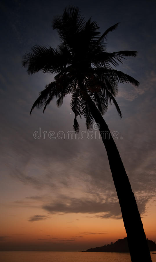 Download Tropical Royalty Free Stock Image - Image: 12956096