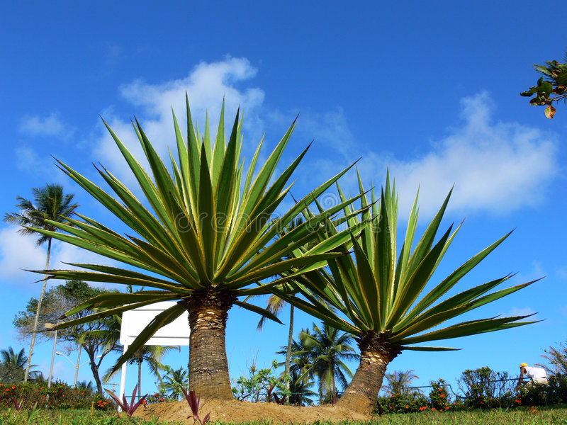 Tropical royalty free stock images