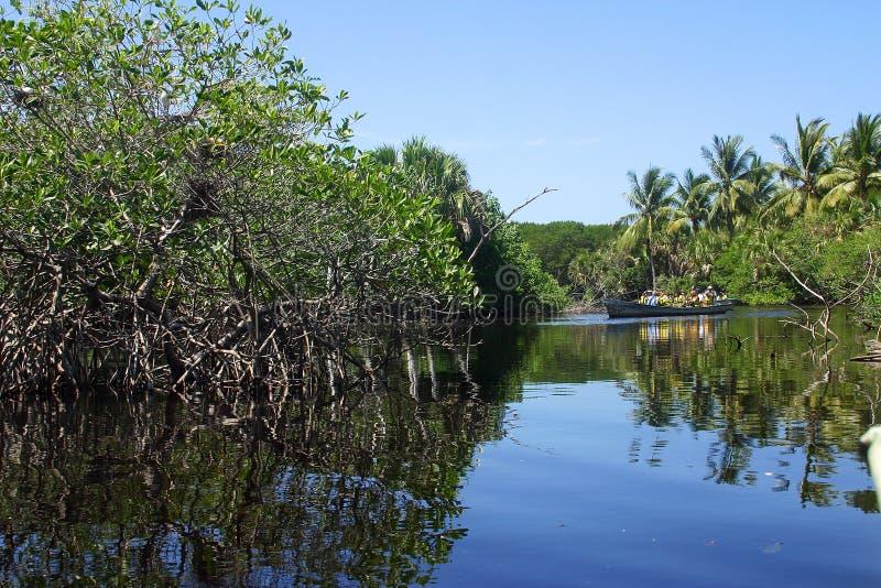 Tropical imagen de archivo libre de regalías
