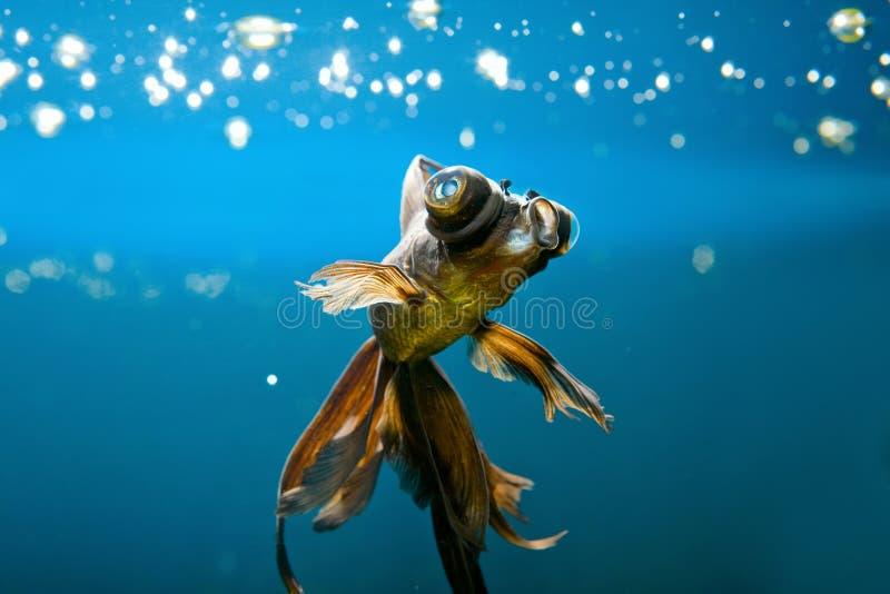 Download Tropical aquarium fish stock image. Image of color, aquatic - 9635597