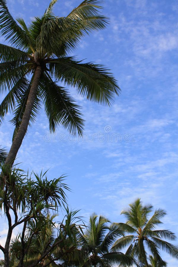 Free Tropical Background Stock Photography - 16538702