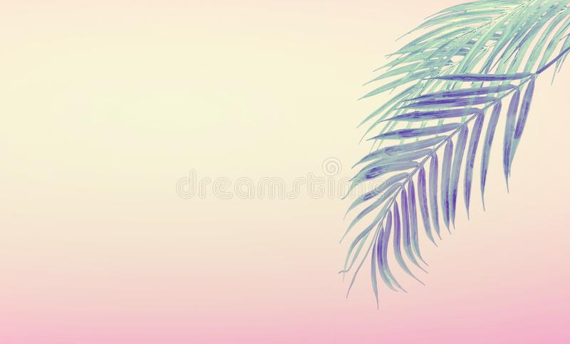 Tropical background with hanging palm leaves at gradient pastel pink and yellow. Summer concept royalty free stock photos