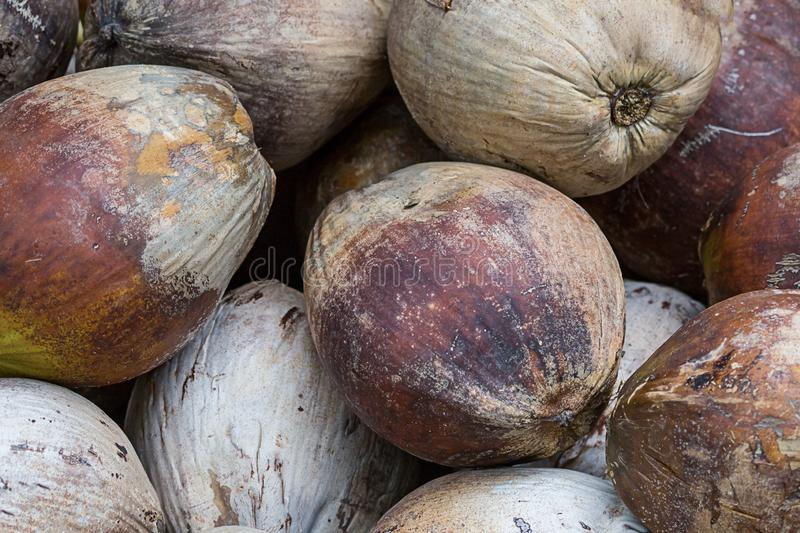 Tropical background many coconut whole fruits brown vegetable pattern base menu site exotic group of nuts royalty free stock images