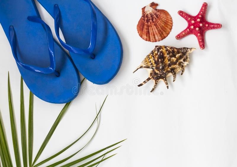 Tropical background of palm leaves with sea shells and star and women`s slates for the beach season.copy space royalty free stock images