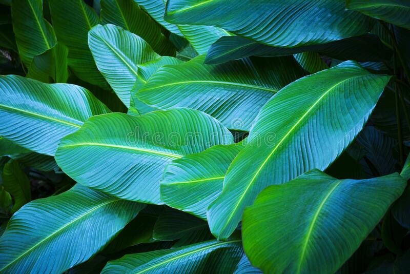 56 640 Tropical Leaves Wallpaper Photos Free Royalty Free Stock Photos From Dreamstime Looking for the best tropical wallpaper? dreamstime com