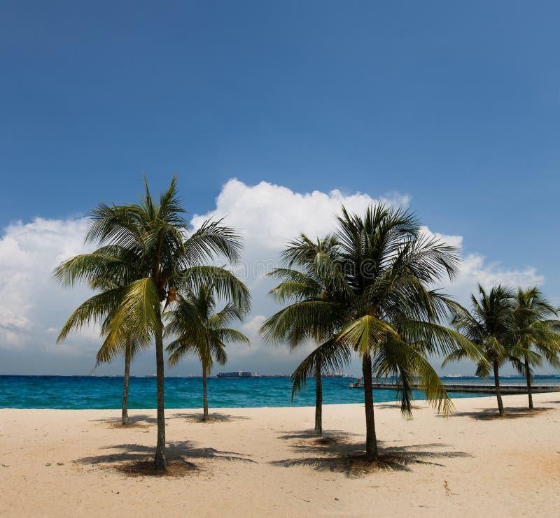 Woman In A Bikini At A Tropical Beach Stock Image