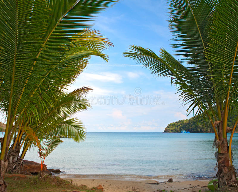 Download Tropical beach stock photo. Image of background, leaf - 15688598