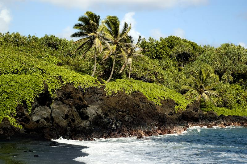 Download Tropical Beach stock photo. Image of maui, green, recreation - 1663494