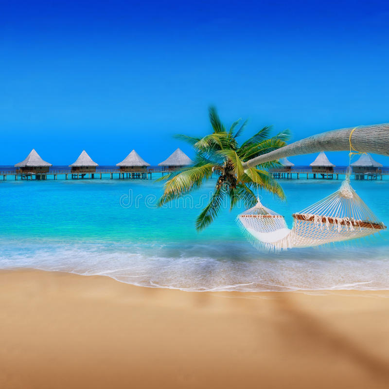 Free Tropical Beach Royalty Free Stock Image - 16707456
