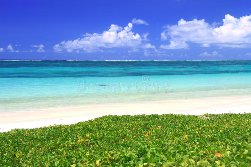 Download Tropical beach stock image. Image of sunny, sunlight - 18225447