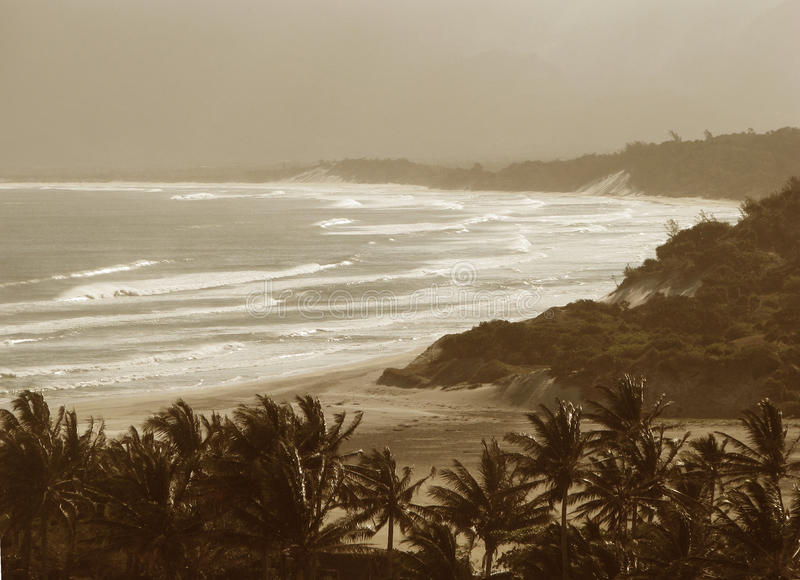 Download Tropical beach stock photo. Image of storm, palm, travel - 18553946