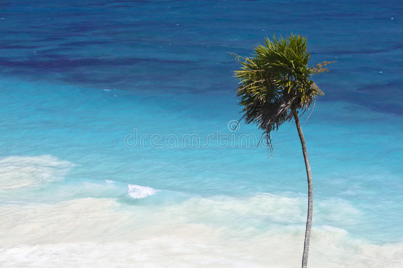 Download Tropical Beach stock photo. Image of shore, relax, ocean - 18602874