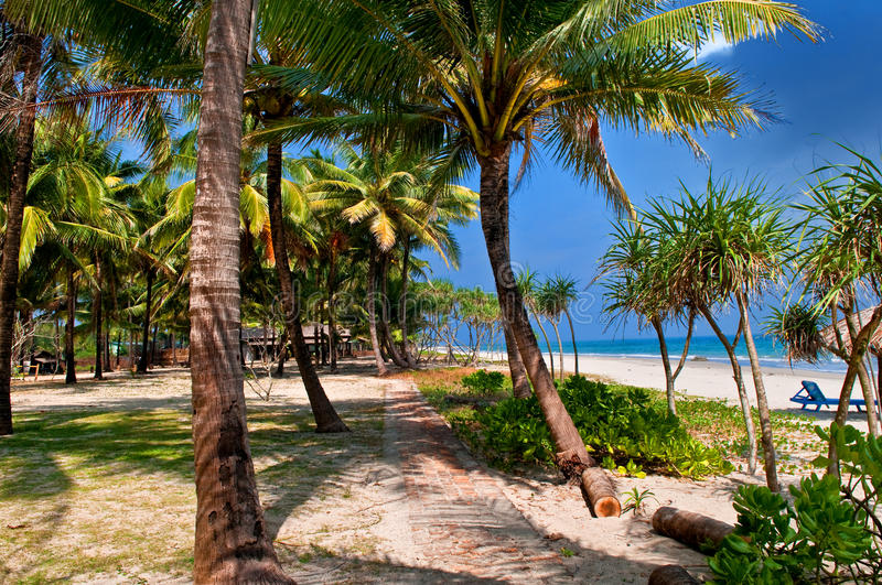 Download Tropical Beach Stock Photo - Image: 19027810