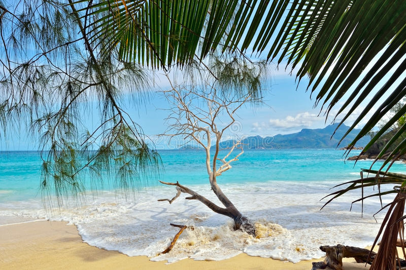 Download Tropical beach stock image. Image of palm, idyllic, dream - 20742301
