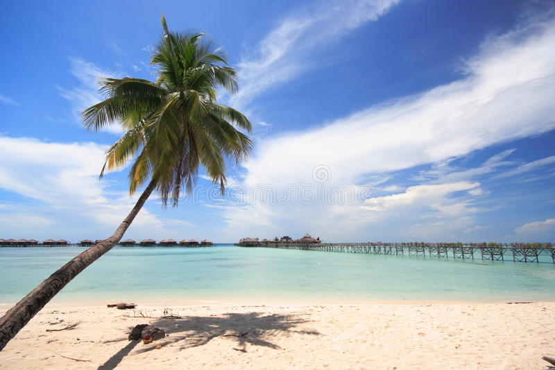 Download Tropical Beach stock photo. Image of shore, palm, island - 21912458