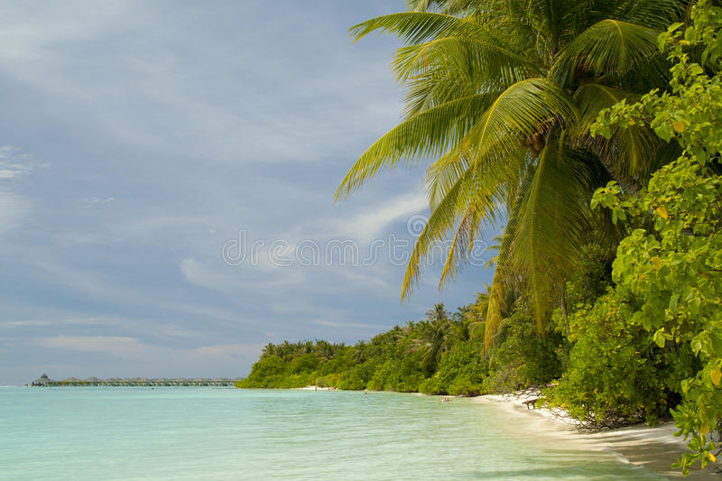 Download Tropical beach stock photo. Image of tropical, cloud - 21935714