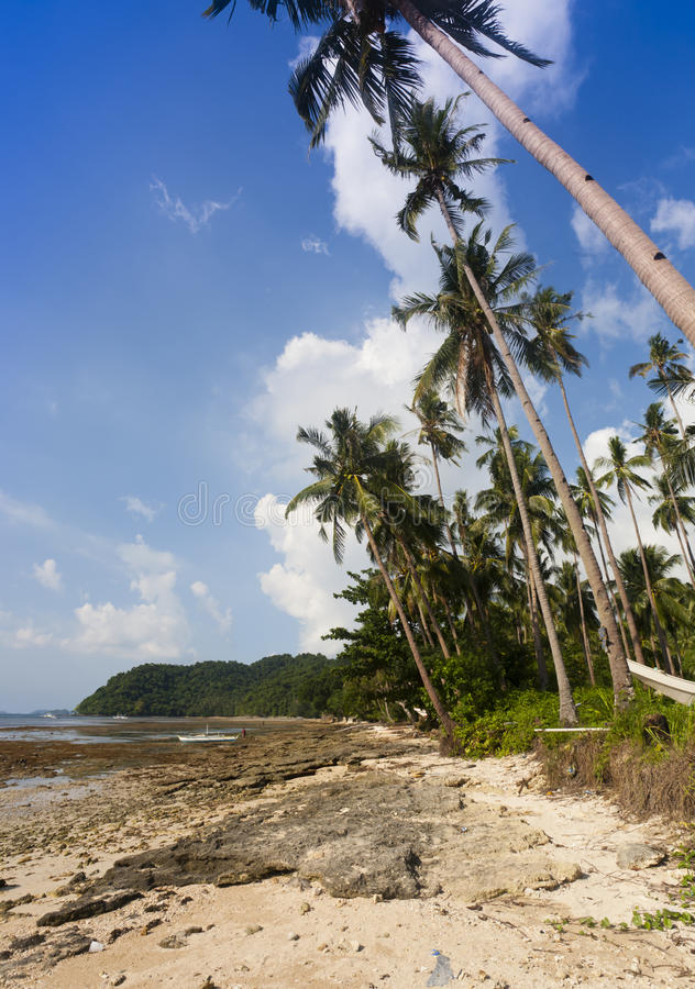 Download Tropical Beach Royalty Free Stock Photo - Image: 24660065