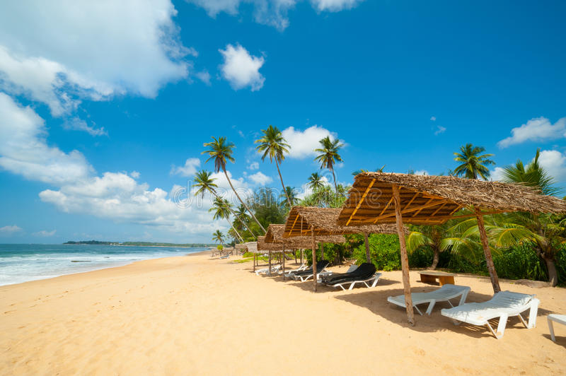 Download Tropical beach stock photo. Image of landscape, palm - 25298532