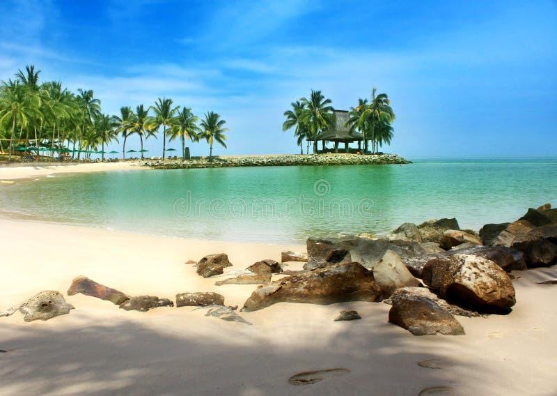 Tropical beach. With blue sky and coconut trees; Tanjung Aru First beach, Kota Kinabalu, Sabah