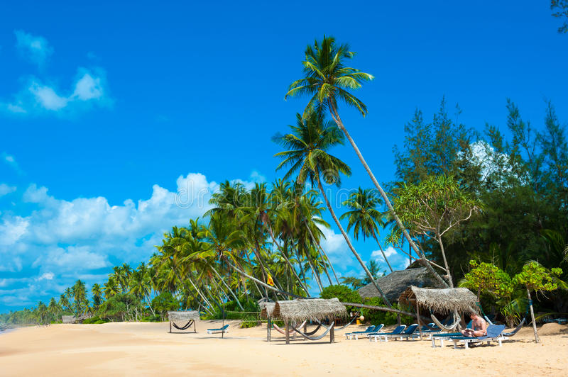Download Tropical beach stock image. Image of scenic, calm, palm - 26107807