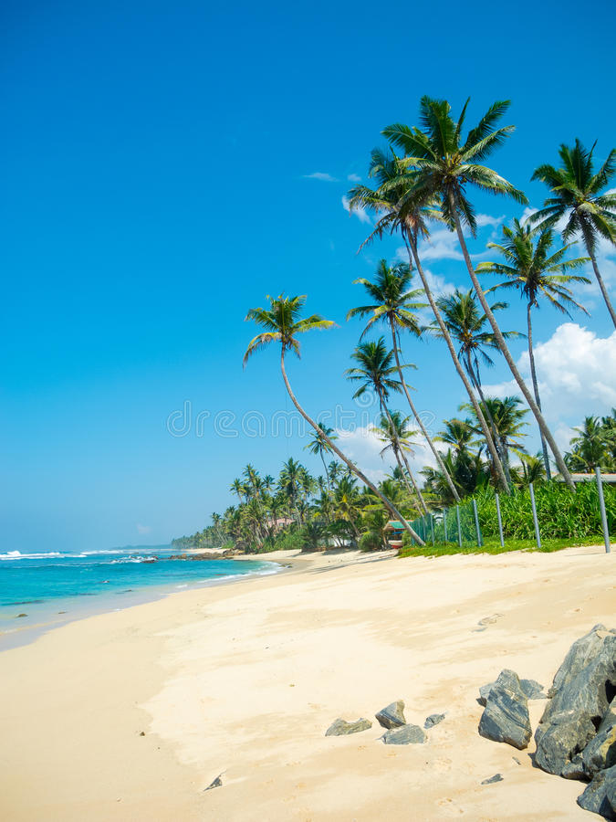 Download Tropical beach stock photo. Image of idyllic, scenic - 26212068