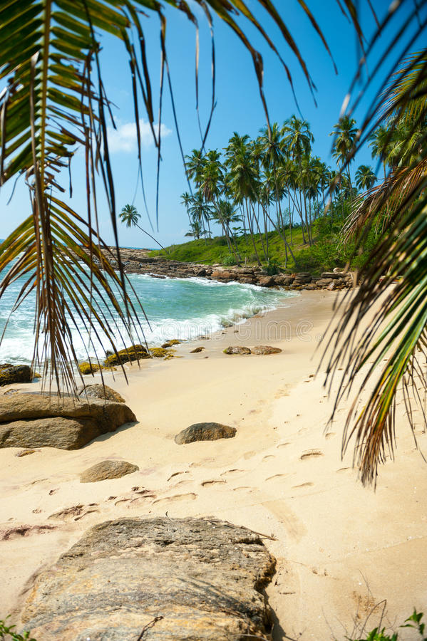 Download Tropical beach stock image. Image of holiday, shore, coastline - 26227319