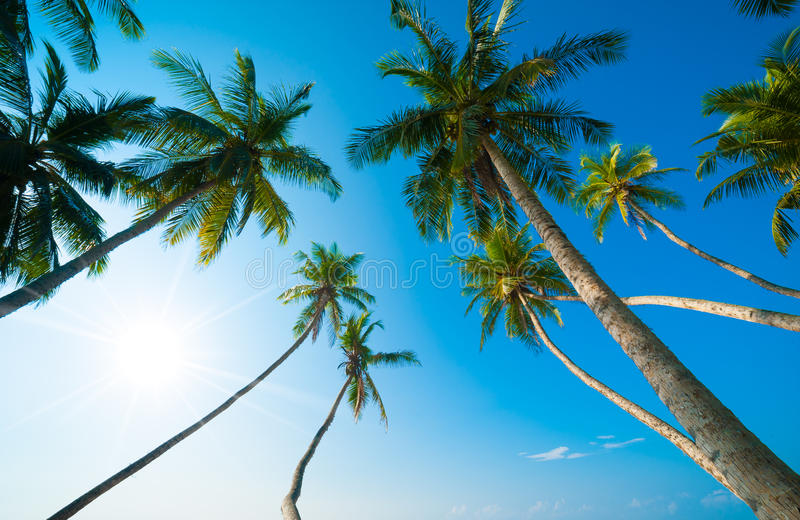 Download Tropical beach stock photo. Image of beautiful, holiday - 26245074