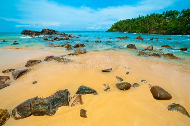 Download Tropical beach stock image. Image of lounge, coastline - 26338395