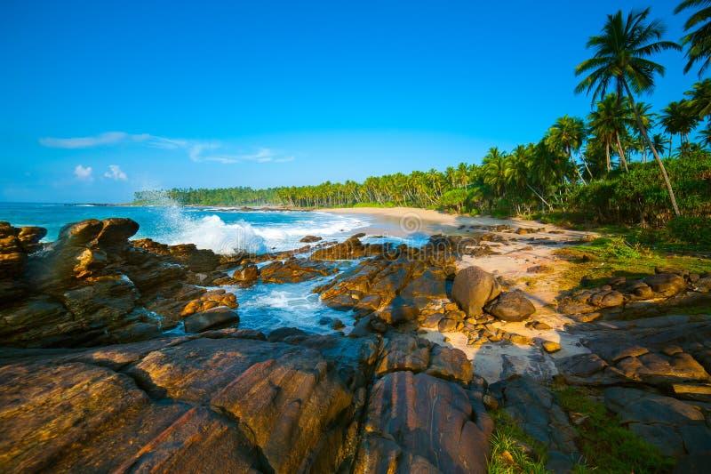 Download Tropical beach stock image. Image of paradise, idyllic - 26387571