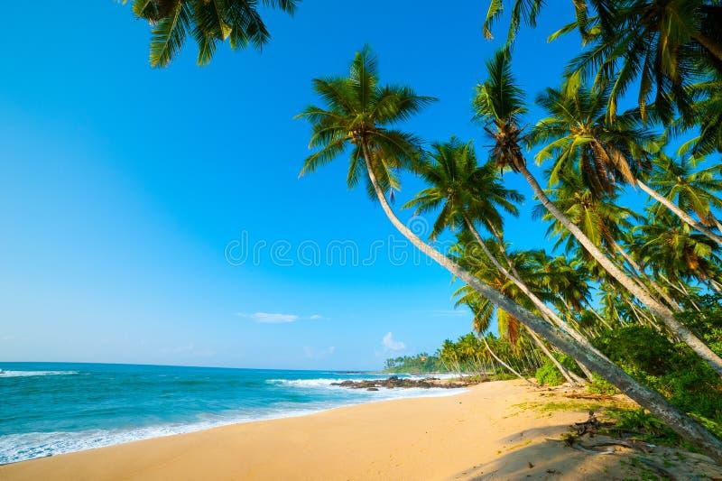 Download Tropical beach stock photo. Image of nobody, nature, lanka - 26387642