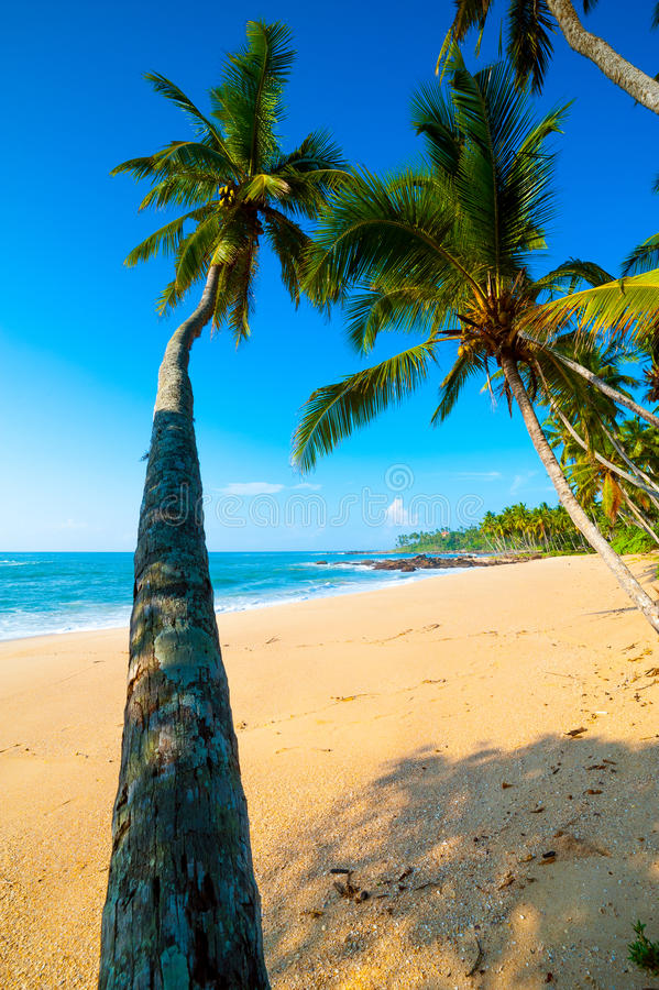 Download Tropical beach stock image. Image of caribbean, coconut - 26387643