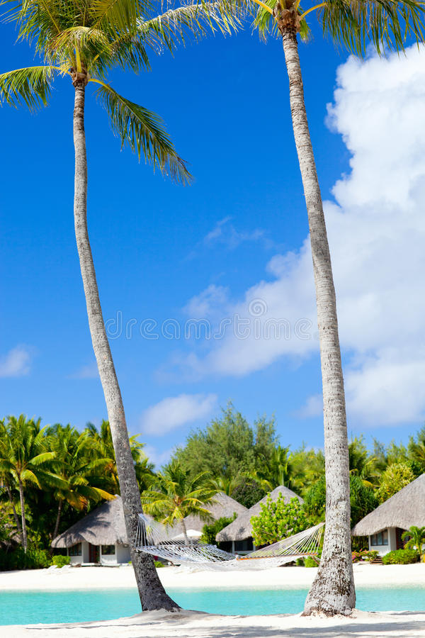 Download Tropical beach stock photo. Image of landscape, palmtree - 26535808
