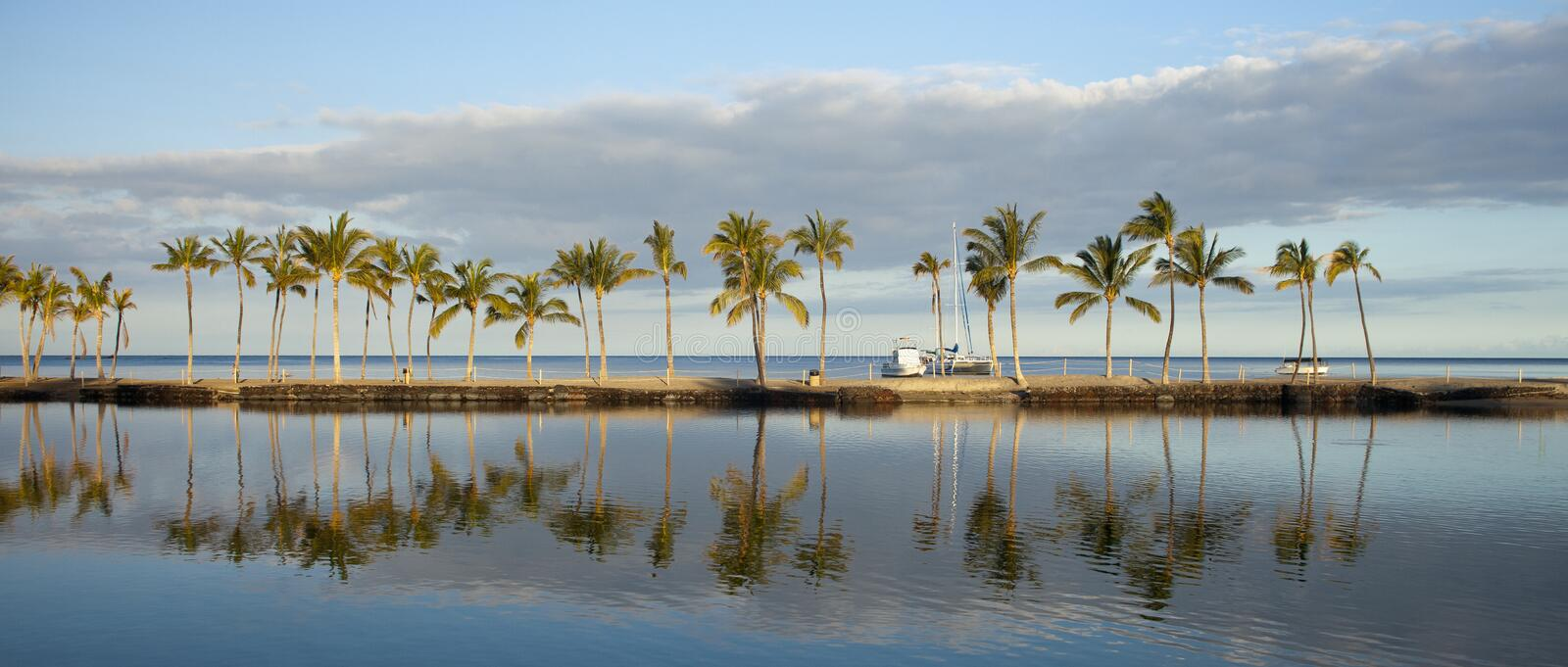 Download Tropical beach stock photo. Image of environmental, nature - 26600130