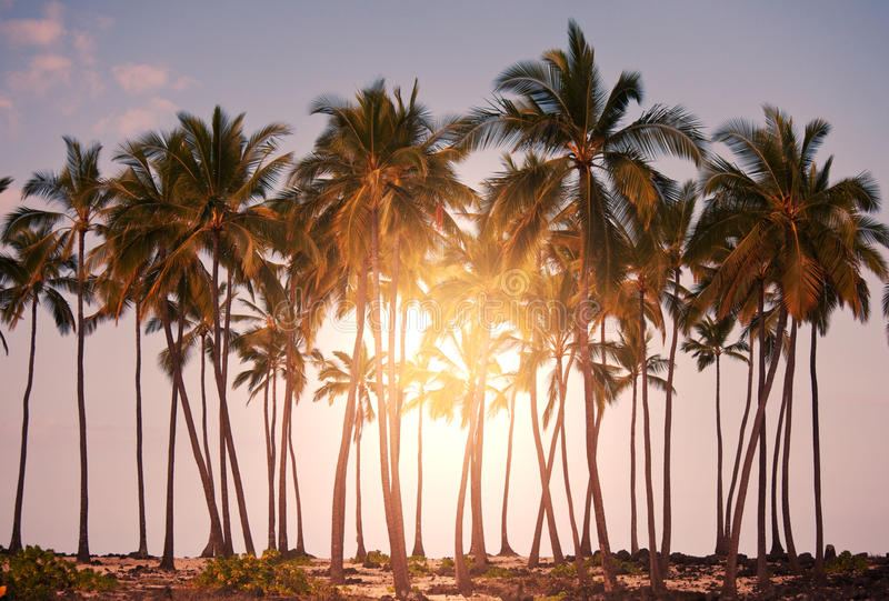 Download Tropical beach stock image. Image of asia, resort, dusk - 27075337