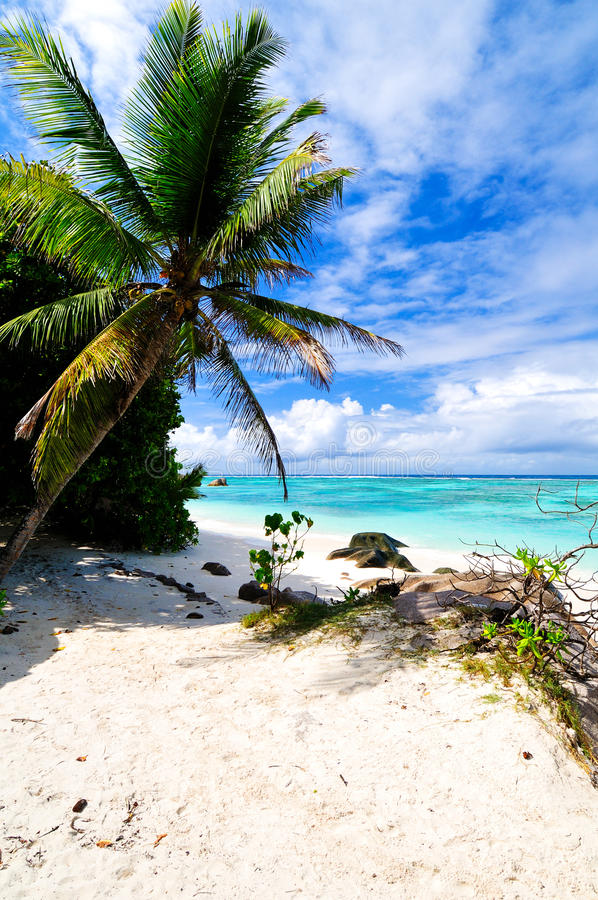 Download Tropical beach stock image. Image of palm, background - 27434891