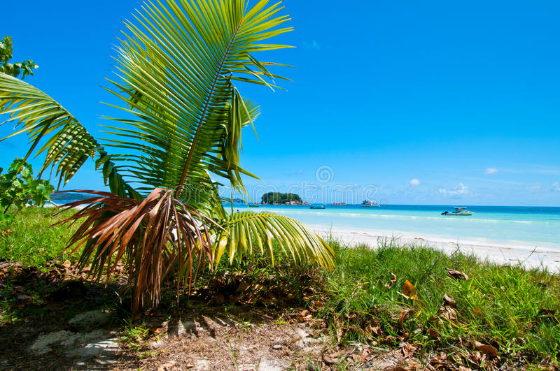 Download Tropical beach stock image. Image of beautiful, holiday - 27435381