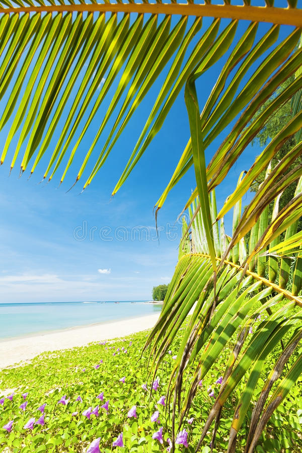 Download Tropical beach stock photo. Image of solitude, purple - 27578188
