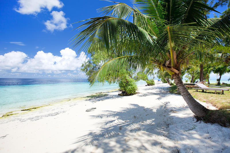 Download Tropical beach stock image. Image of exotic, summer, palm - 27627005