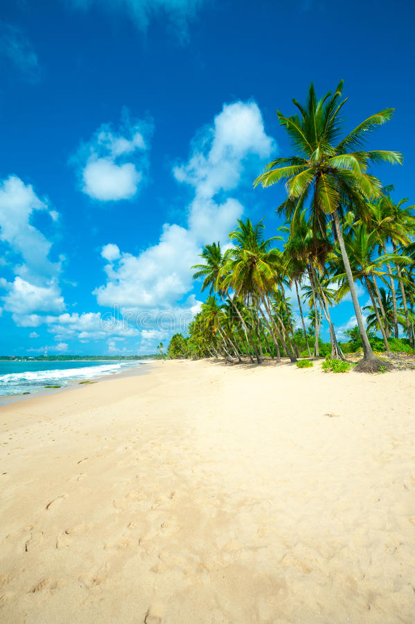 Download Tropical beach stock image. Image of sand, scenery, plant - 27972013