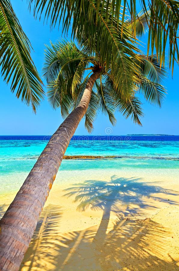 Download Tropical Beach Stock Photo - Image: 27995110