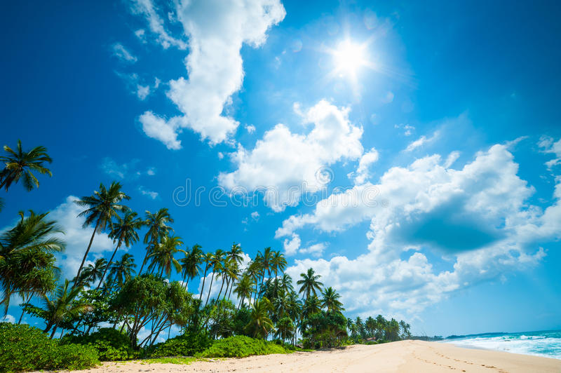 Download Tropical Beach Royalty Free Stock Photo - Image: 28019515