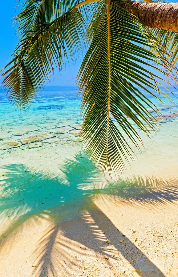 Download Tropical Beach Stock Images - Image: 28207104