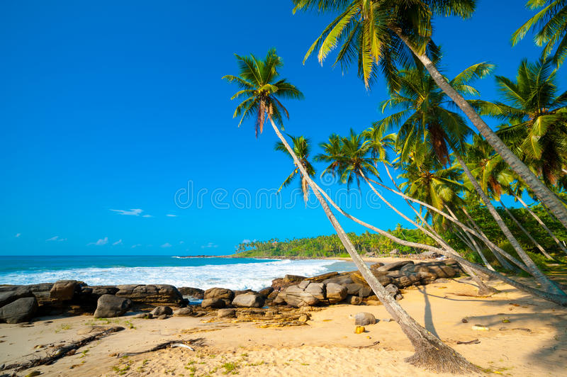 Download Tropical beach stock image. Image of paradise, blue, relax - 28336261