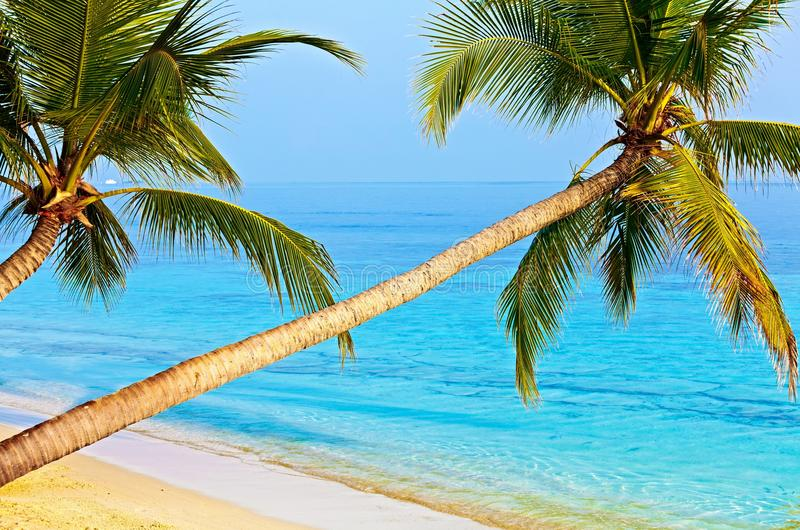 Download Tropical beach stock image. Image of maldives, coral - 28477133