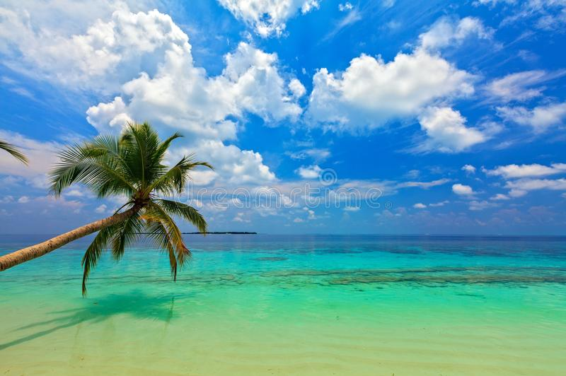 Download Tropical beach stock photo. Image of midday, nature, bahamas - 28477140