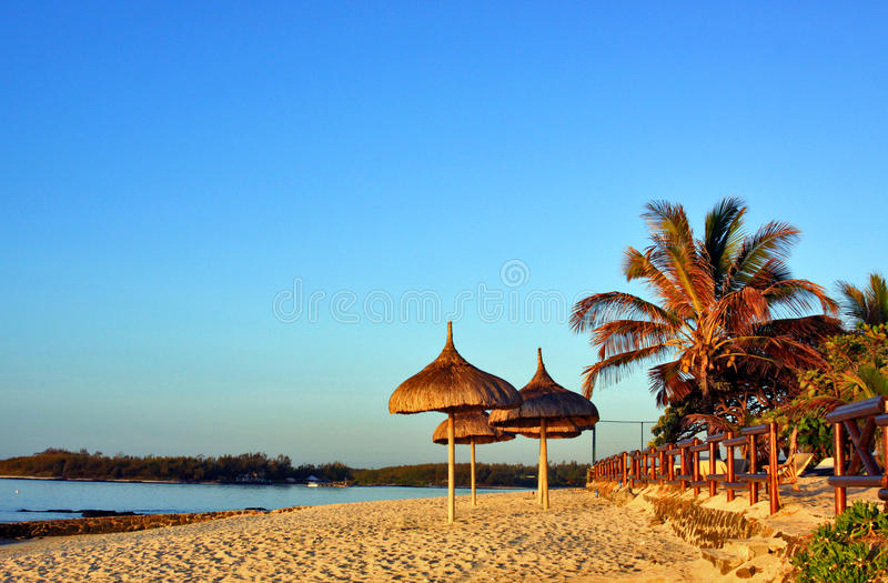 Download Tropical Beach stock image. Image of tree, summertime - 28480345