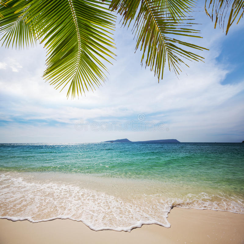 Download Tropical beach stock image. Image of nature, palm, dusk - 28823545