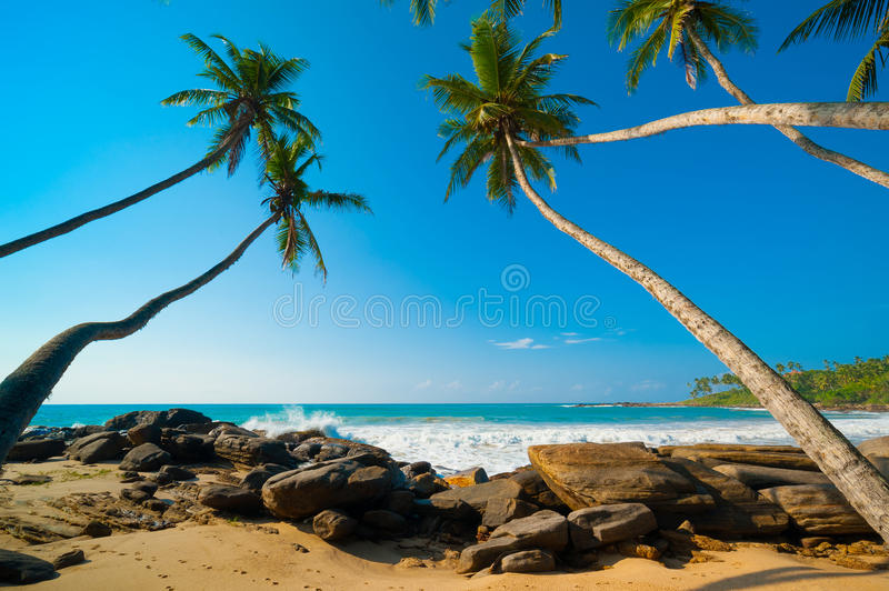 Download Tropical Beach Stock Image - Image: 28847341