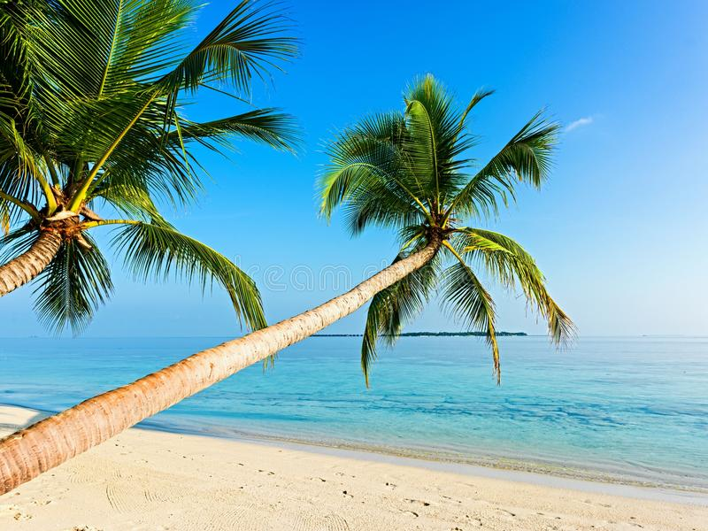 Download Tropical beach stock image. Image of palmtree, palm, blue - 28921073