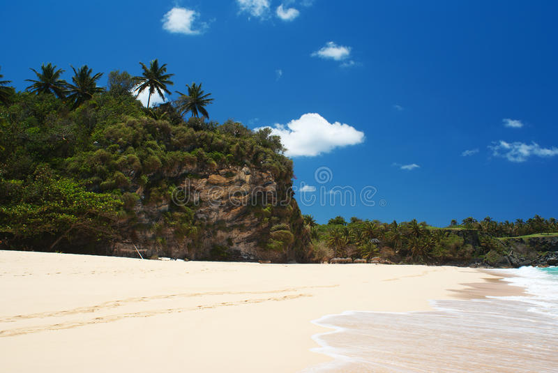 Download The Tropical Beach Stock Photo - Image: 28986270